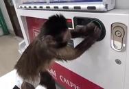 Thú vị xem chú khỉ tự mua nước ngọt